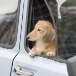ペットといっしょに引越しをするコツ~犬・ネコ・熱帯魚