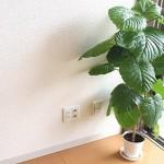 引越し業者に観葉植物や盆栽を運んでもらうことは可能か?