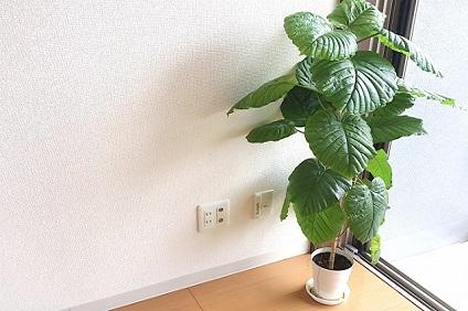 運び出す予定の観葉植物