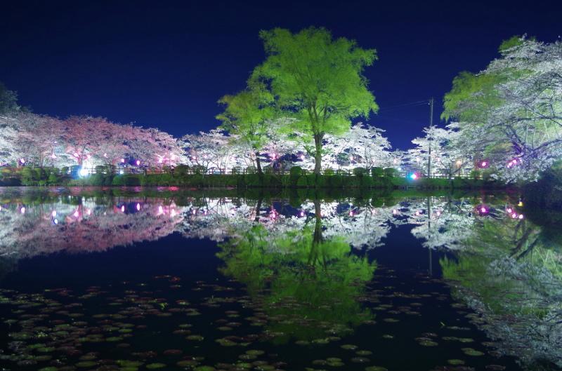 茂原市の夜桜