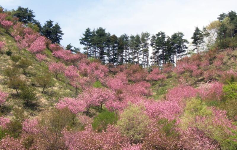 榛東村の自然